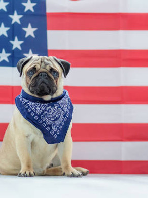 Is Your Pet Prepared for the Fourth of July?