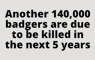 Cull Text  Another 140,000 badgers are due to be killed in the next 5 years.jpg