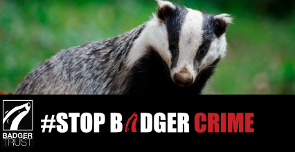 Public urged to help combat badger crime after latest horrific attacks