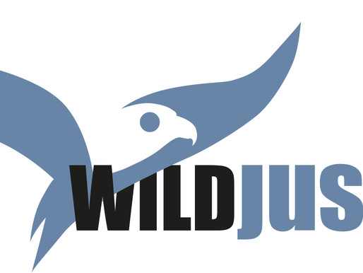 Wild Justice petition for badgers tops 100,000 signatures