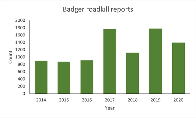 Project Splatter - Badger roadkill report graph showing 2014 to 2020 with peaks in 2017 and 2019 at nearly 1800 roadkills