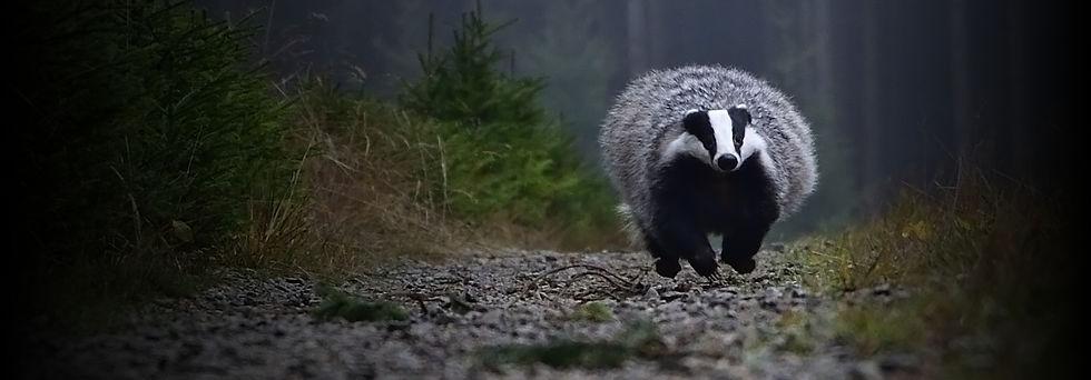 give-badgers-a-break-hero-202104-AdobeSt