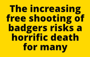 Cull Text  The increasing free shooting of badgers risks a horrific death for many.jpg