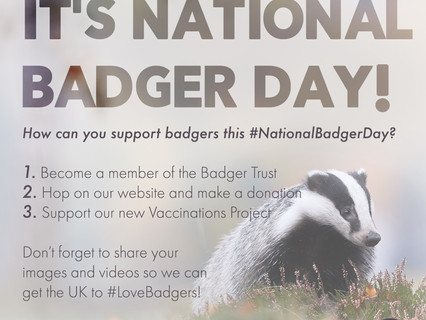 It's National Badger Day!