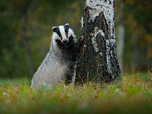 National BadgerDay