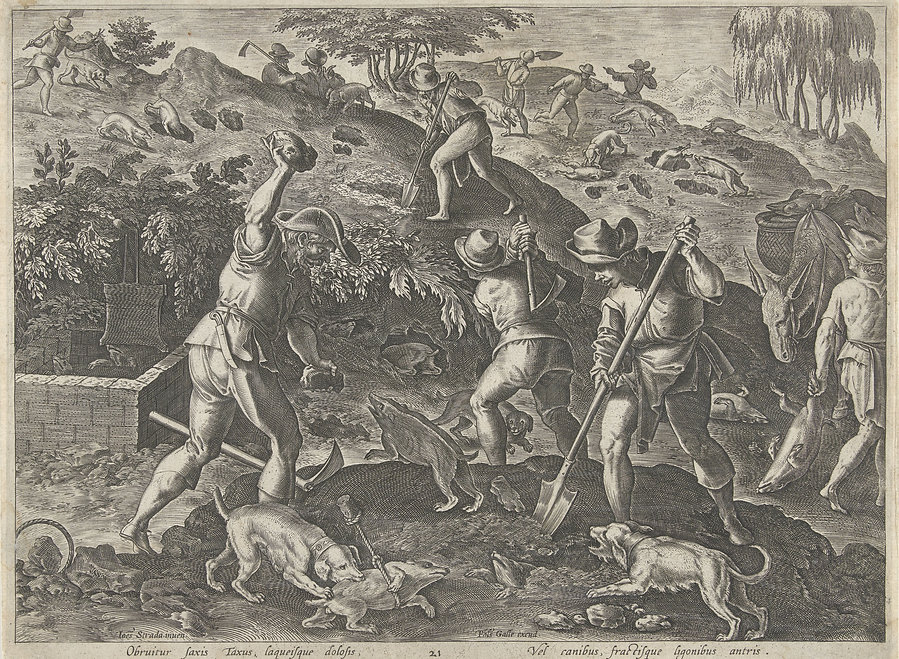 Old engraving of men digging out badger sets and hunting badgers