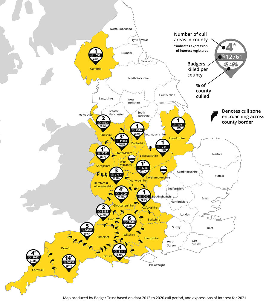 Badger Trust Cull Map showing countries where badgers are being culled and the amounts affected