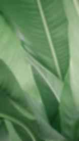 naturopathie, 44, juliette portier, julietteportiernaturopathe, naturopathe, médecine alternative, médecine douce, médecine complémentaire, médecine traditionnelle, médecine non conventionnelle, hygiène de vie, naturelle, alimentation, psychologie, exercice physique, santé, corps, sain, éducateur de santé, 7 espace santé
