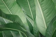 bananblader