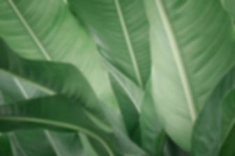 Blue Tropical Plant Leaves in Background