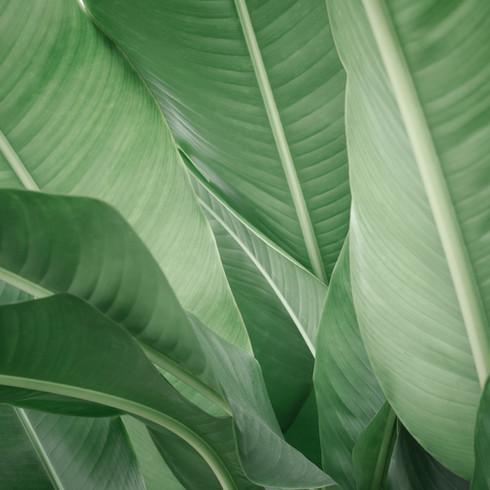 Pépinière à Domicile | Plantes pour jardin