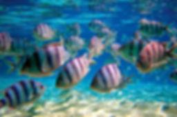 Snorkeling Tamarin ile Maurice