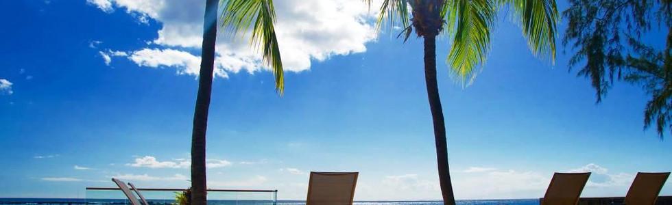 Vue palmiers et lagon