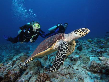 Plongée sous marine...