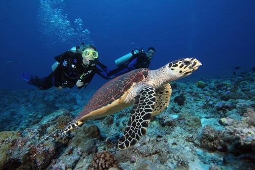 Centre de plongée sous marine à Flic en Flac Ile maurice