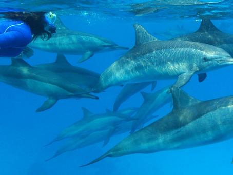 Nager avec les dauphins...