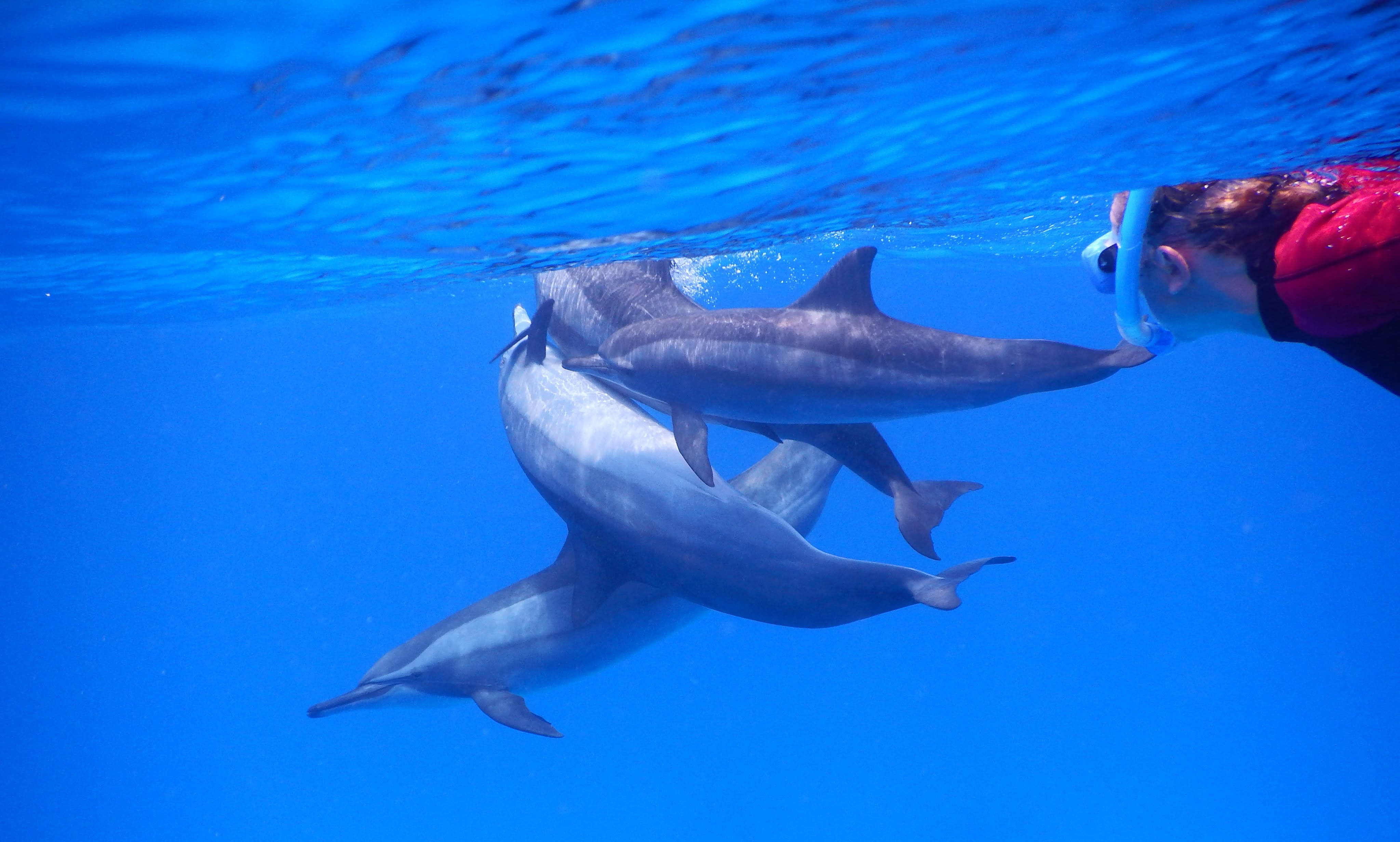 nager avec les dauphins ile maurice