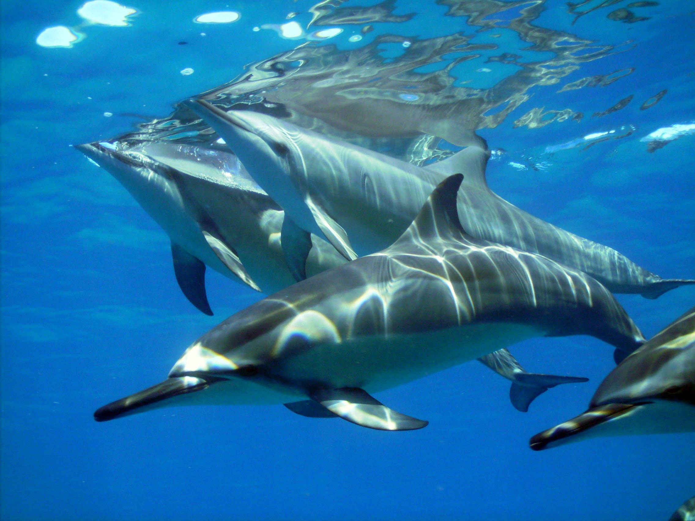 flic en flac dauphins