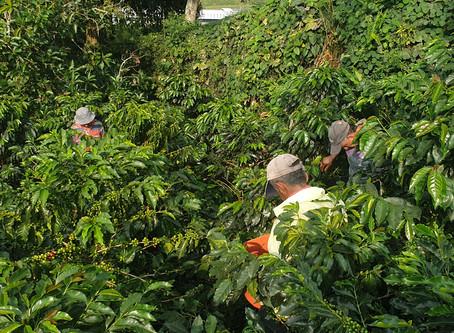 新冠病毒對哥倫比亞2019-20咖啡的影響