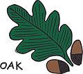 oak icon.jpg