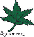 sycamore icon.jpg
