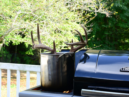 DIY Euro Deer Skull Mount