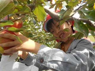 年長組 りんご狩りを体験しました。