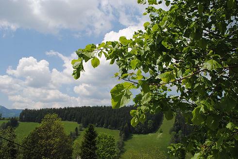 Aussicht_mit_Lindenblätter.JPG
