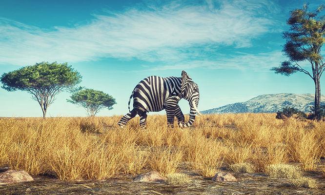 Zebra Elephant