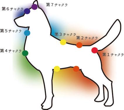 レイキヒーリング/犬のチャクラ