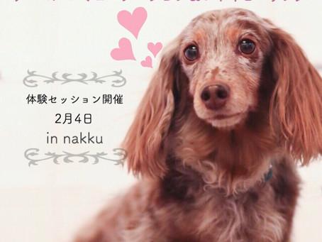 アニマルコミュニケーション&レイキヒーリング in nakku