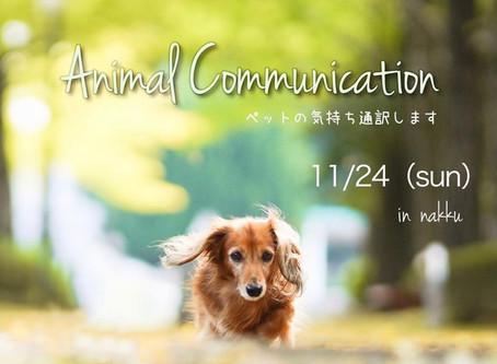 アニマルコミュニケーション in nakku