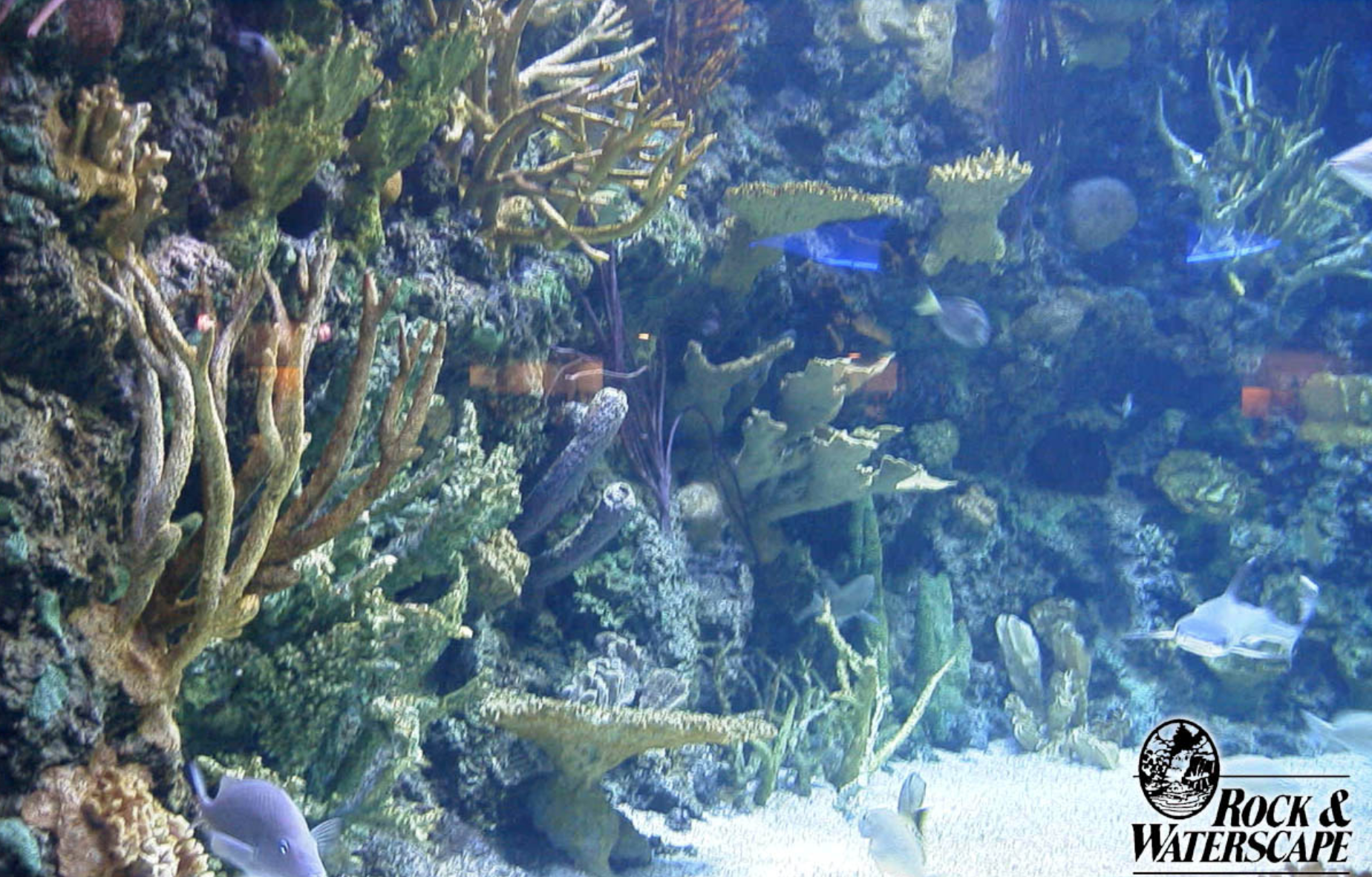 Rock & Waterscape Themed Environment Coral Reef