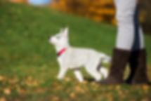 Puppy Training, housebreaking, crate training