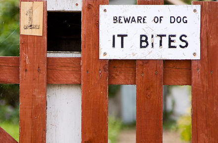 Dog aggression solutions.