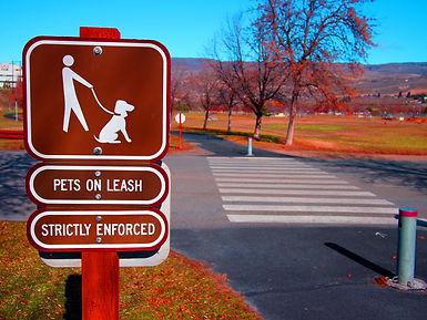 On leash dog training. Dog behavior.