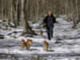 Disfrutando en la nieve del Montseny con mis perros