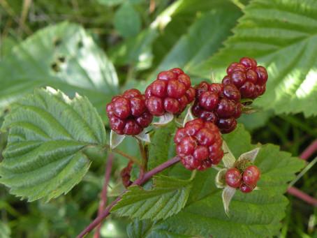 Karmels hage 27: De syv fruktene av Thèrèse av Jesusbarnets omvendelse