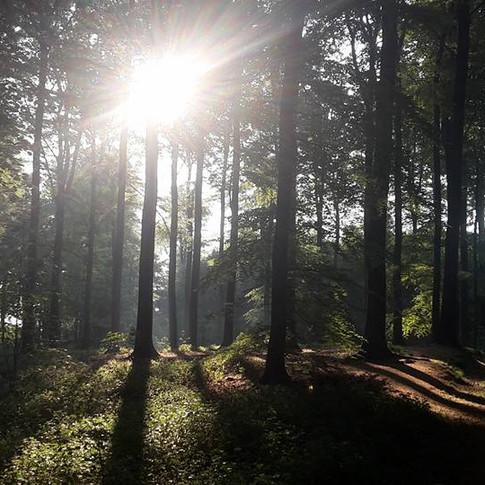 la forêt de soignes au réveil