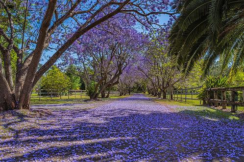 Purple Carpet Greeting Card