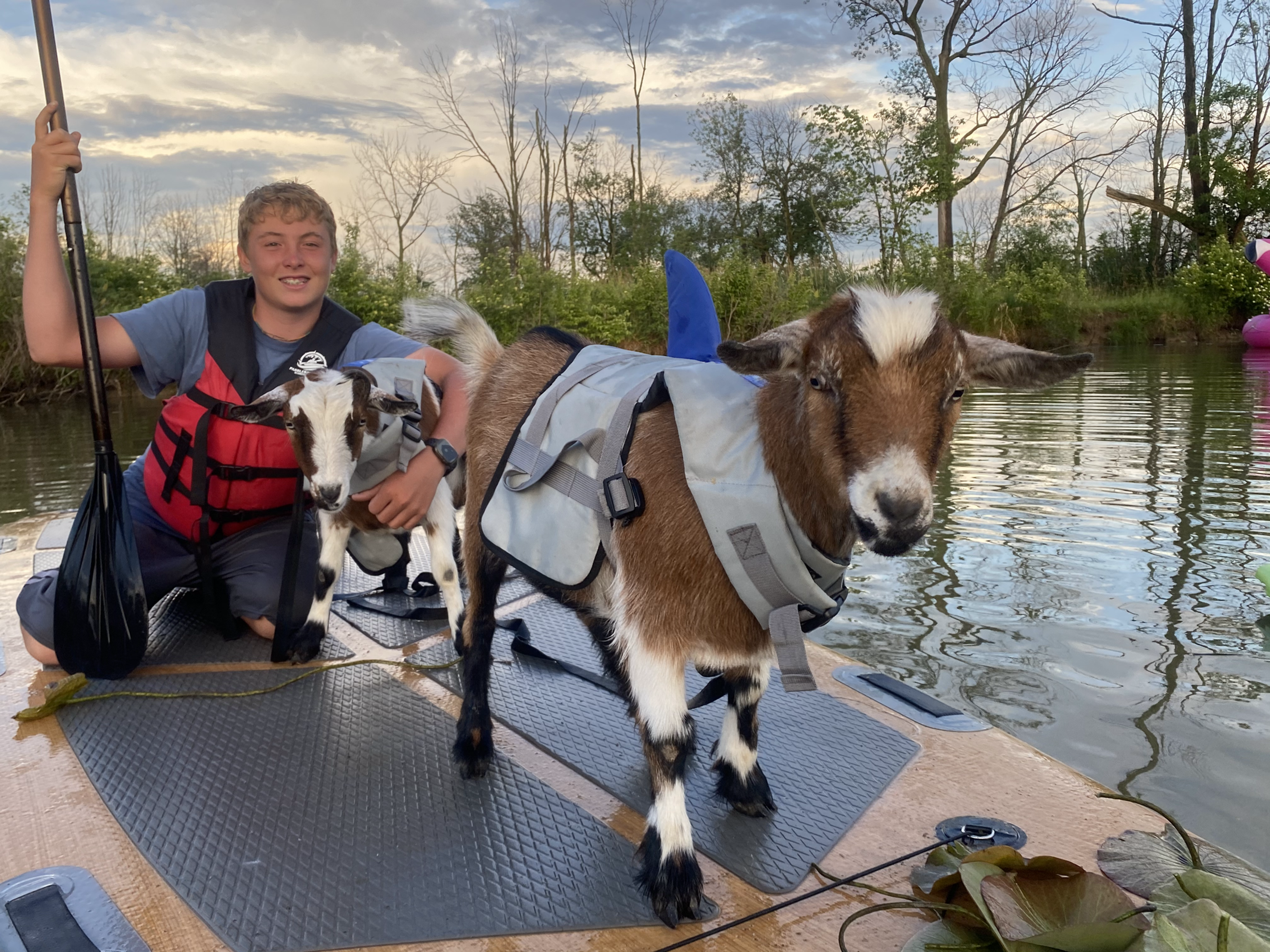 Paddleboarding With Goats For 2 People