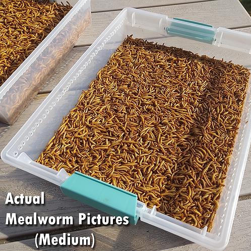 3000 Live Mealworms - FREE Shipping! Bulk, Grown Organic in Florida - Medium