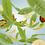 Thumbnail: Maison Berger Zest of Verbena Fragrance Lamp 500ml Refill