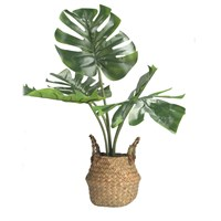 Gisela Graham Faux Cheese Plant in Rattan Basket