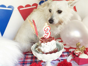 Jax's 3rd Birthday Pawty