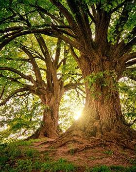 tree-3822149__340.jpg