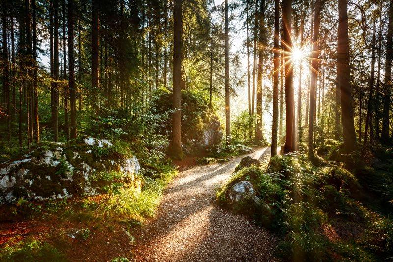 forêt-clairière-et-canopée.jpg
