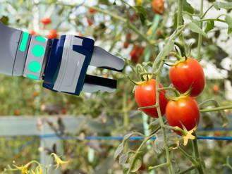 International Agro, Food & Technology week 2018 in Israel: meet the Dutch delegates!