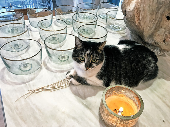 Kitty Curry, the candle cat!