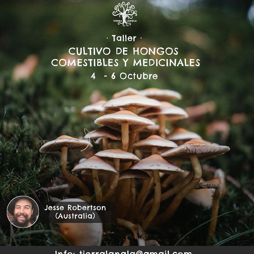 Taller de cultivo de hongos comestibles y medicionales